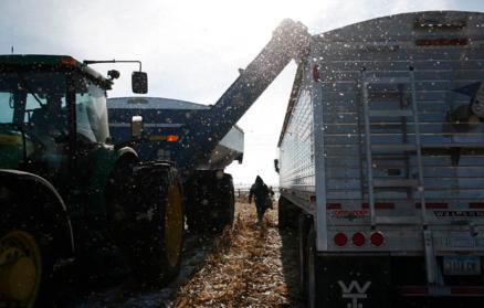 Grain carting.