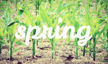 Spring edit final